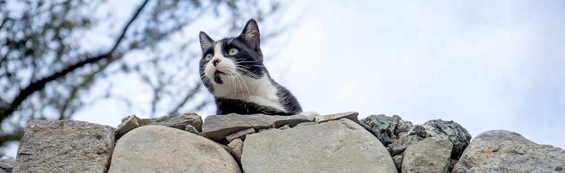 How to stop other cats coming through cat door
