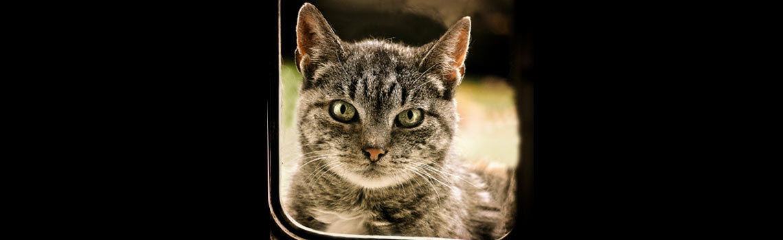 Cat Flap Advice: Why Have a Cat Flap?